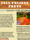 Fall Foliage Facts